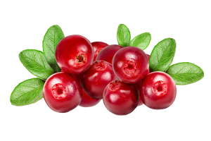Adult Lyme 1 - Cranberries