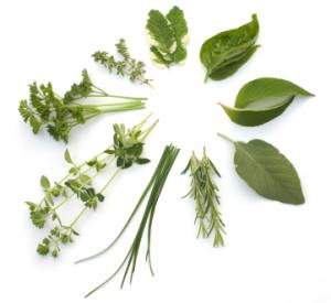 Naturopathic Medicine 2 - Herbs Circle